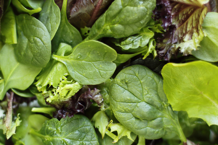 Close-up photo of fresh greens Stock Photo