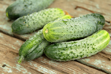 Freshly picked cucumbers, unwashed, on a wooden surface