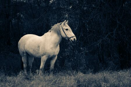 A white horse on a field