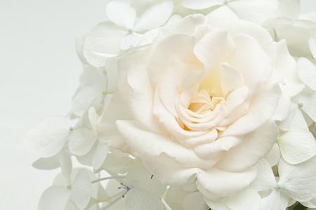ramo de flores blancas Foto de archivo