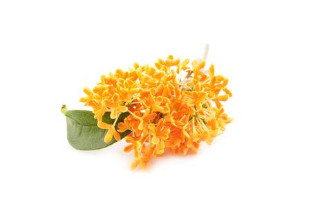 꽃에 감미로운 osmanthus