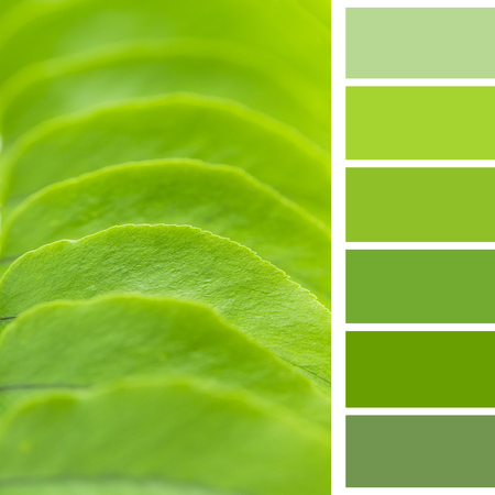 green leaf, a color pallette Stock Photo