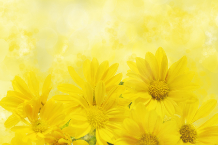 floral background with yellow chrysanthemum Foto de archivo