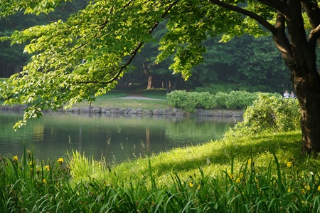 riverside landscaping: Nakajima Garden in the morning,Sapporo,Japan