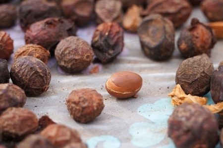 Argan fruits (Argania spinosa),famous herb in Morocco