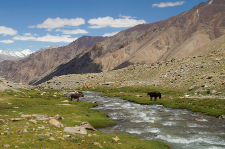indian creek: Landscape with mountain, rock and stream at Ladakh, Northern India Stock Photo