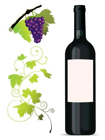 Set van wijnrankbladeren elementen Stockfoto - 4065547