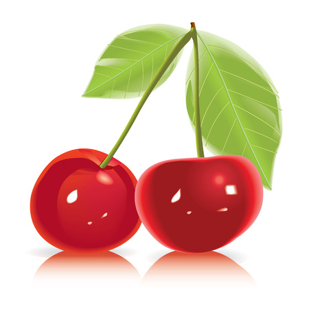 two cherries isolated on white background high detailed vetor