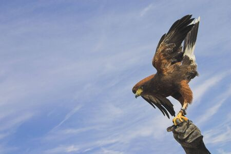 call of nature: eagle towards the sky