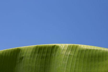 Palm, Banana Leaf and blue sky photo