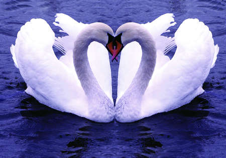Bonded for life  The symbol of lasting love photo