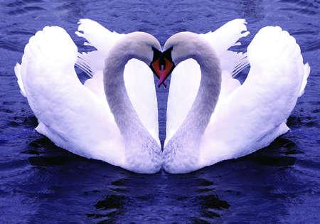 Gebonden voor het leven Het symbool van blijvende liefde