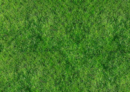 Grass Background for limitless use Stock Photo