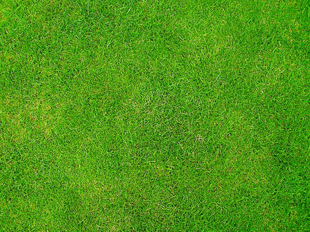 Green Grass Stock Photo - 528178