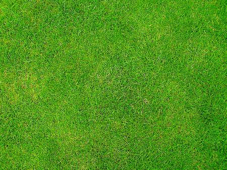 Green Grass Stock Photo - 528178