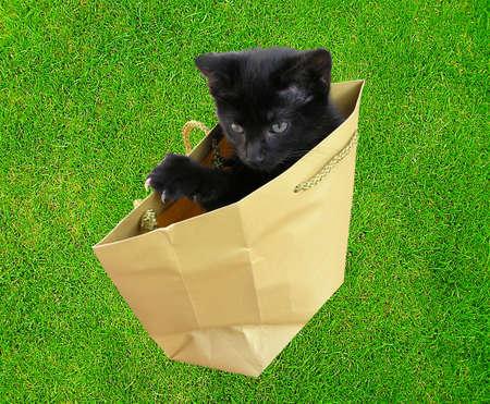 Letting the cat out.....Metaphorletting,cat,out,bag,animal,metaphor,release,inform,insecure,divulge,secret,black,kitten,escape,communication,business,informer, photo