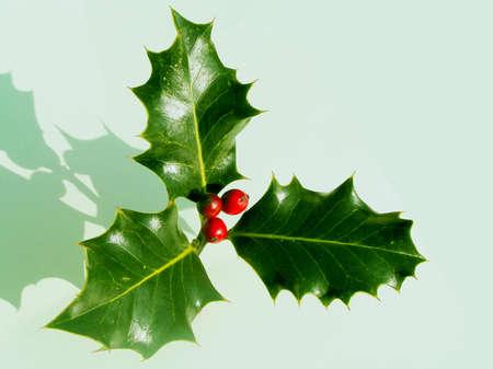 Kerstmis Shadows de Holly houdt de Kroon