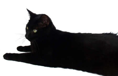 catlike: Lucky Black Cat for well wish cards