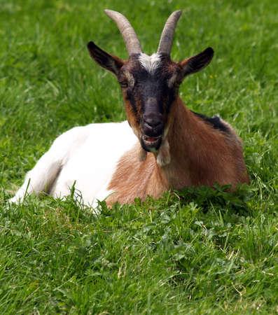 Cuernos de cabra s�mbolo del diablo Foto de archivo - 1356467