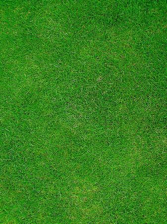 Green Grass geven een sportterrein veld