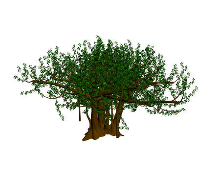 Banyan Tree con sus raíces rastreras hermoso  Foto de archivo - 2457414