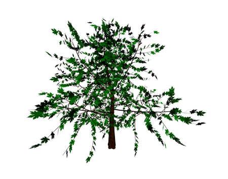 looked: Elm tree this is what they looked like Stock Photo