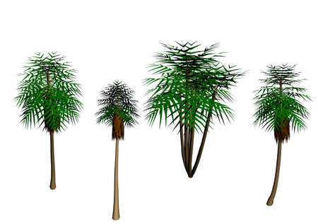 pave: Easter palm trees waiting to pave your path