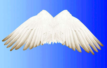 spread wings: Angel wings that everyone wants to get someday