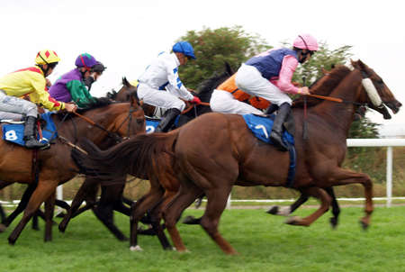 Field of horses racing at a meeting         Stock Photo