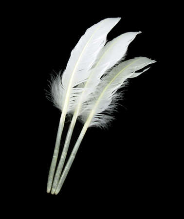 Three swan feathers traditional image for handwriting photo
