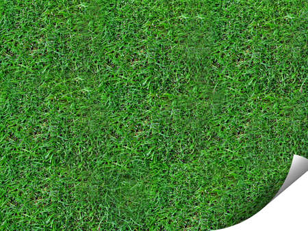 Curl of grass background giving an eye catching look Stock Photo