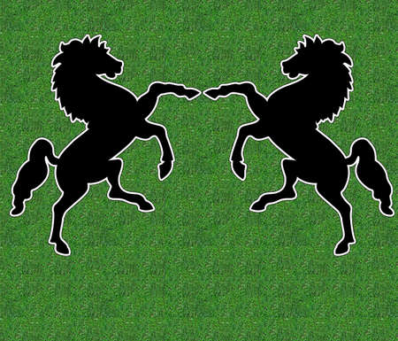 Black stallions dancing as in a circus photo