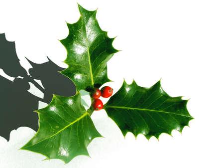 almanac: Christmas Shadows the Holly bares the Crown