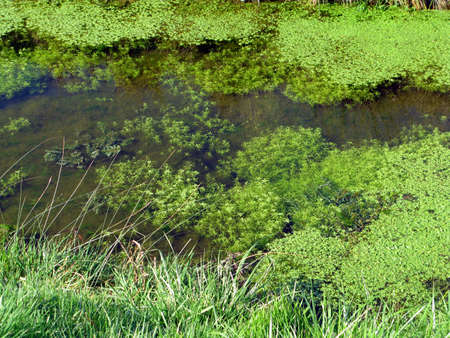 photosynthetic: Spring and the algae is back in green