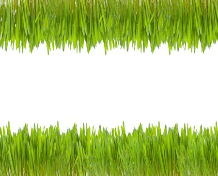two line of green grass