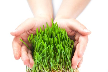 Worn Women hands protect sprouts green grass Stock Photo