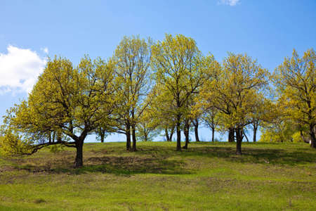 hillock: Spring trees on a hillock Stock Photo