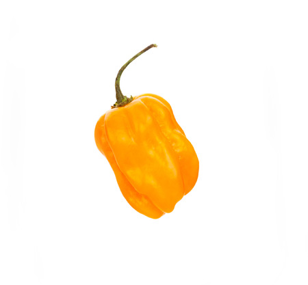 hottest: chili habanero hottest pepper on white