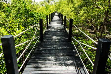 mangrove forest: wood bridge in mangrove forest Stock Photo