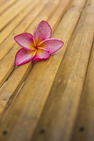 Pink plumeria on a Bamboo photo