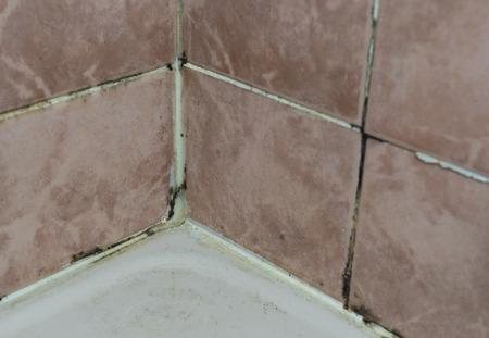 bathroom tile: Black mold growing on shower grouted joints tile in bathroom wall corner