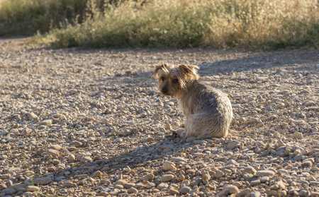 occhi tristi: Lonely dog on a road. Doggy with sad eyes looking back, desolating image. Dog maybe asking for help. Possibly abandoned animal