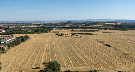 Panoramic view of an agricultural field in summer season. Mowed wheat Harvesters already passed on plantation, seed gold color planting