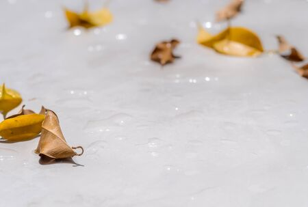 waterproof cement floor at fall season, concrete pavement, cement coating wet with water drops and fallen tree leaves. decorative cement flooring exterior at garden.