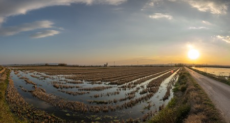 Flooded rice paddy and traditional Mediterranean farm house, gigapan Albufera Valencia, Spain