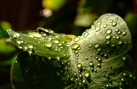 rain water drops on green leaf of plant spring concept Standard-Bild
