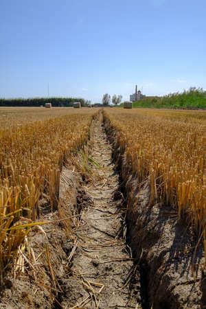 Tractor wheel track in dry harvested rice field Standard-Bild