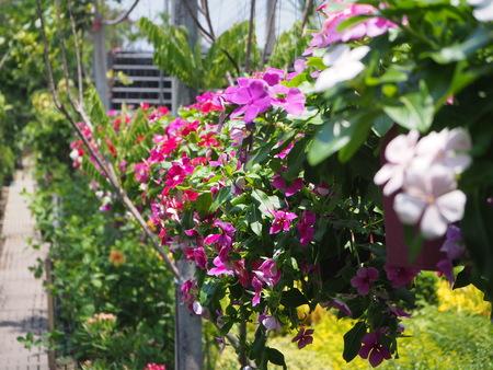Flower in the garden Stock Photo