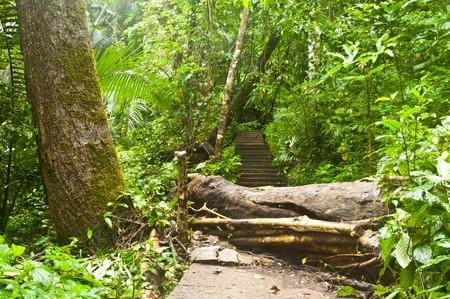 hinder: Broken tree block on the way