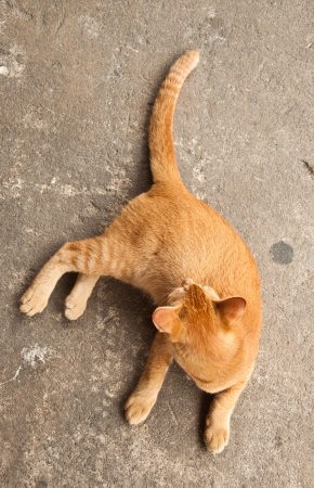 Top view of ginger cat on concrete photo